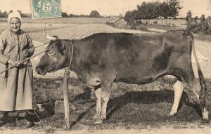 La Ferme - 17 Une Solognote gardeuse de vaches-1